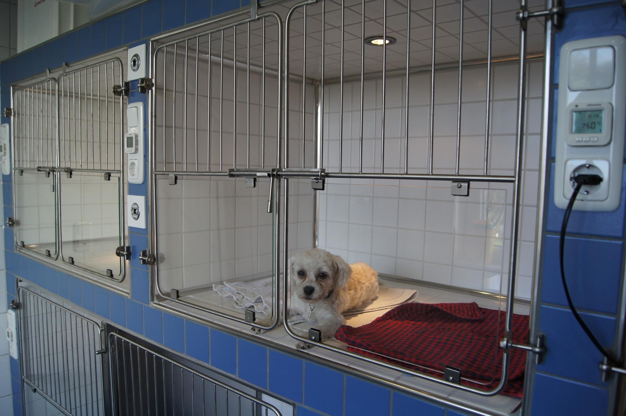 Hund auf Intensivstation