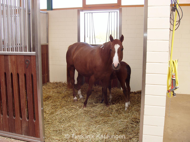 Pferdebox, Stute, Fohle, mit Auslauf,