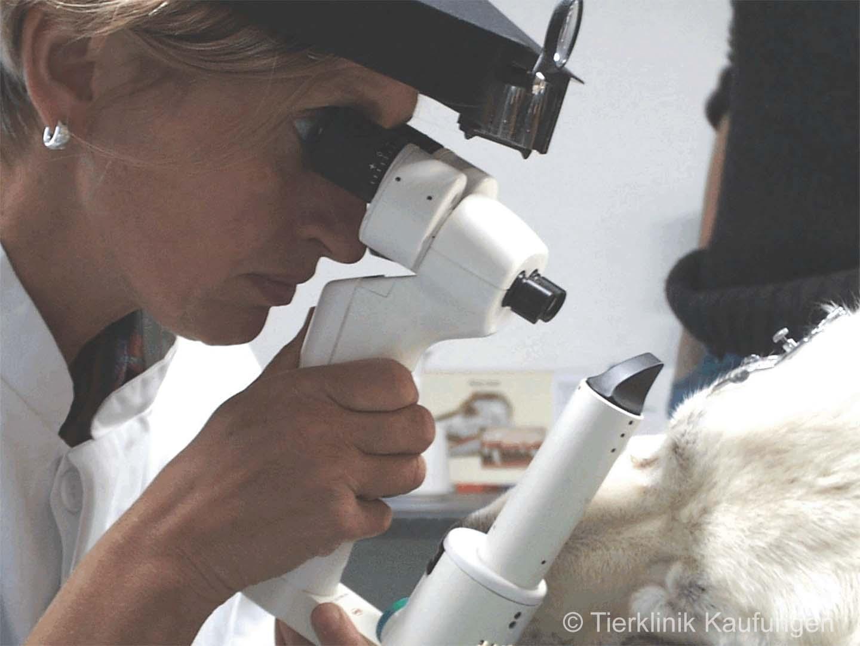 Ophthalmologische Untersuchung eines Hundes mit der Spaltlampe