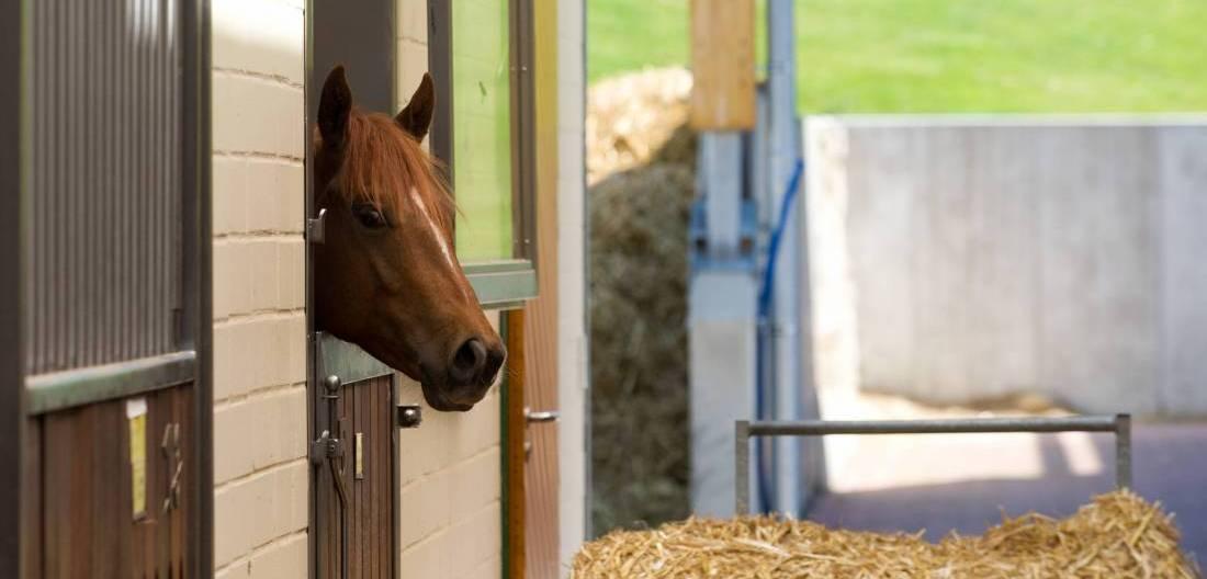 Pferd in Normalstation