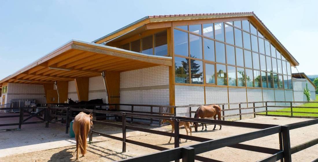 Pferdepaddocks